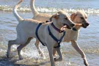 pet friendly hotels & activities