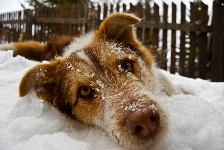 Top Cold Weather Tips For Dogs And Cats