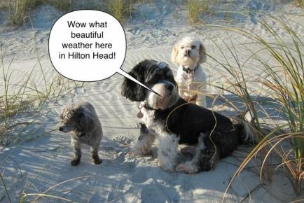 Pet Friendly Hilton Head Resort Golf