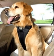 Pet Seat Belts