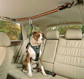 Pet Zipline Seat Belt