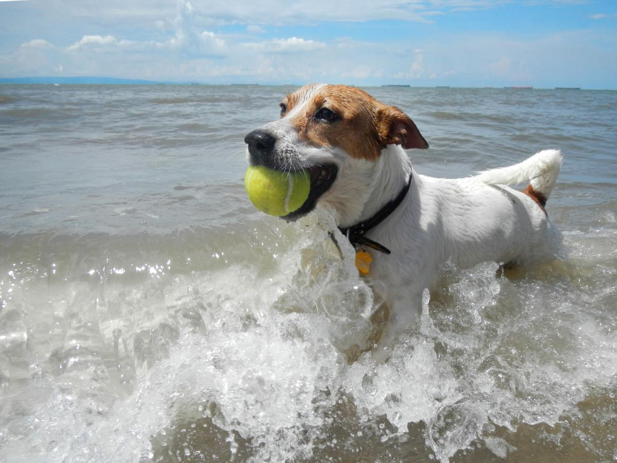 7 Tips For a Safe and Fun Dog Day at the Beach