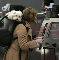 Top US Pet Friendly Airports