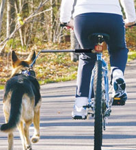 Biking with Your Dog