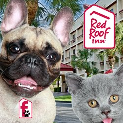 Pet Friendly Red Roof Inn
