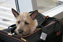 Summer Airline Pet Embargoes