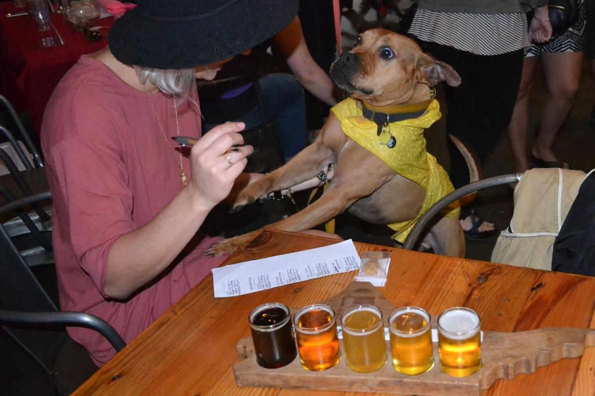 Top Dog-Friendly Breweries in North Carolina
