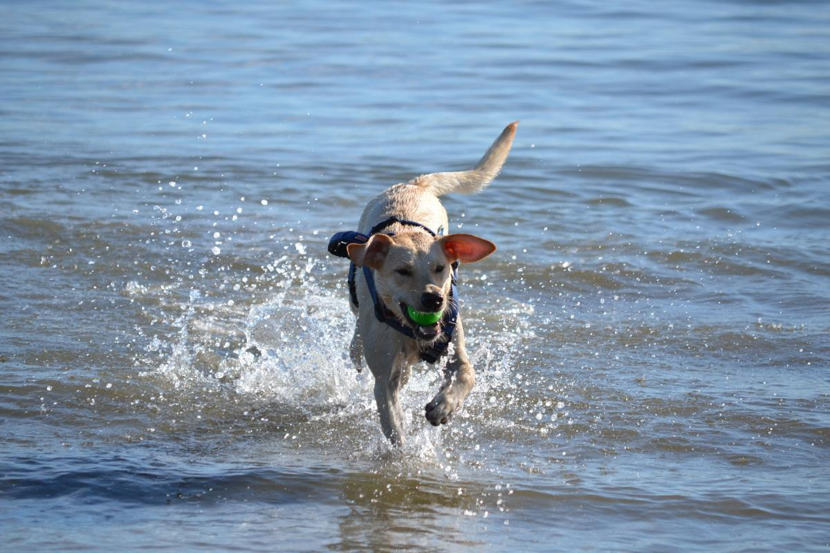 Dog Friendly Beach In Jekyll Island