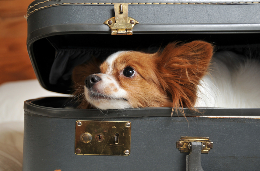 Hotels with Pet Programs