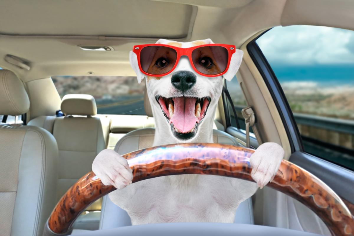 Roadtrip with Your Pet in 4 Easy Steps