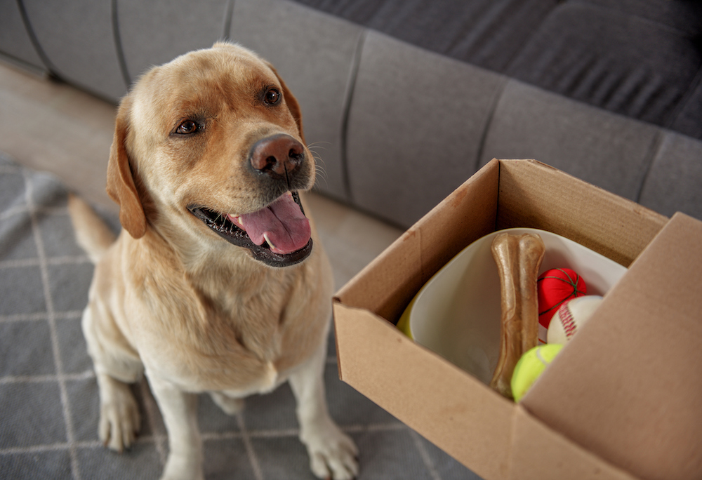 Pre-Moving Day Tips for Pets