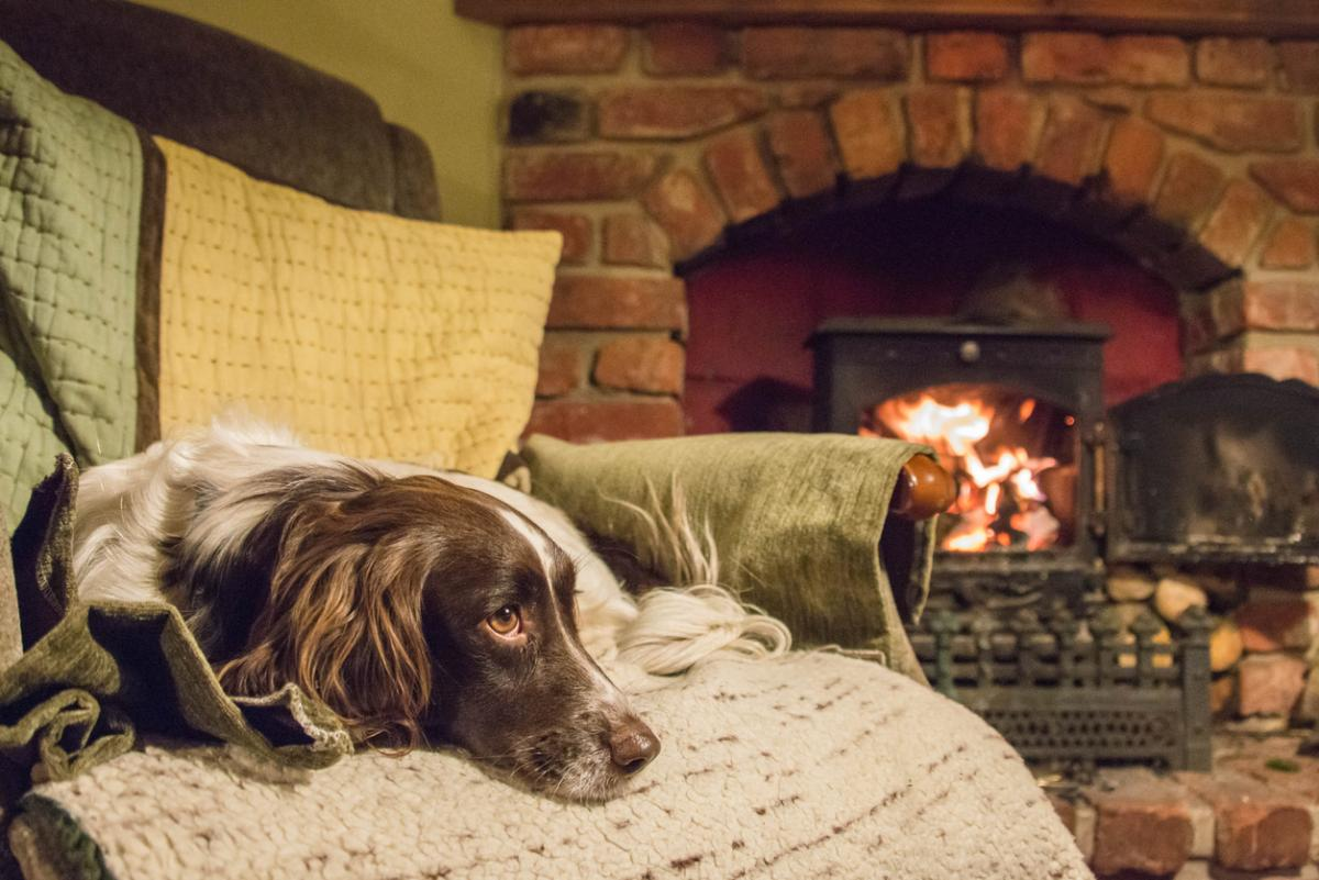 Retreat to these Pet-Friendly Getaways that Won't Break the Bank