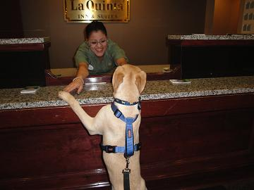 Tucker Checking In at La Quinta-Where Pets Stay Free