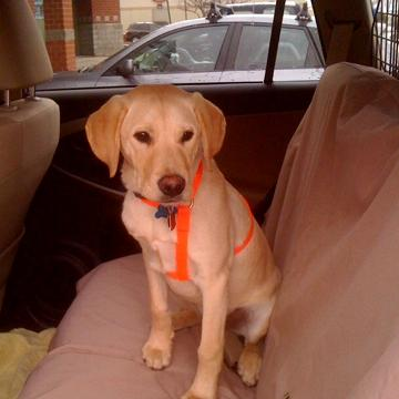 Pet Auto Safety Restraint