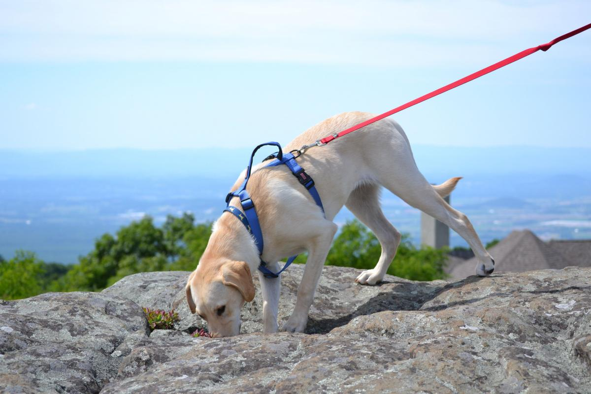 Top 5 Tips for Hiking with Your Dog