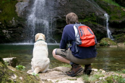 Happy Dog Days Vacaion Rentals