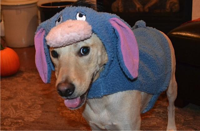 Diy tricks can make fidos halloween a treat tripswithpets pet friendly halloweeen solutioingenieria Images