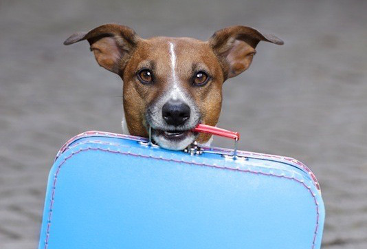 Top 5 Most Popular Hotel Chains For Pet Friendly Stays