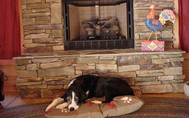 Asheville North Carolina Pet Friendly