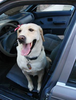 Pet Friendly Car Rentals