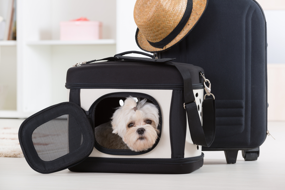 Top 5 Pet Friendly Airports