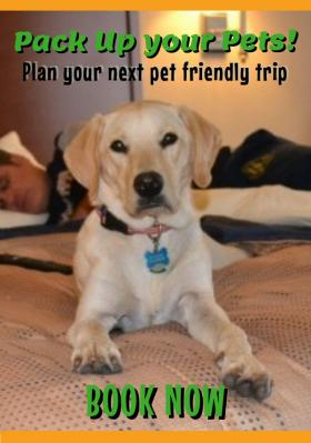 Book Pet Friendly Hotels