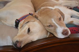 Pet Friendly Hotels: Pet Hotel Etiquette & Helpful Tips