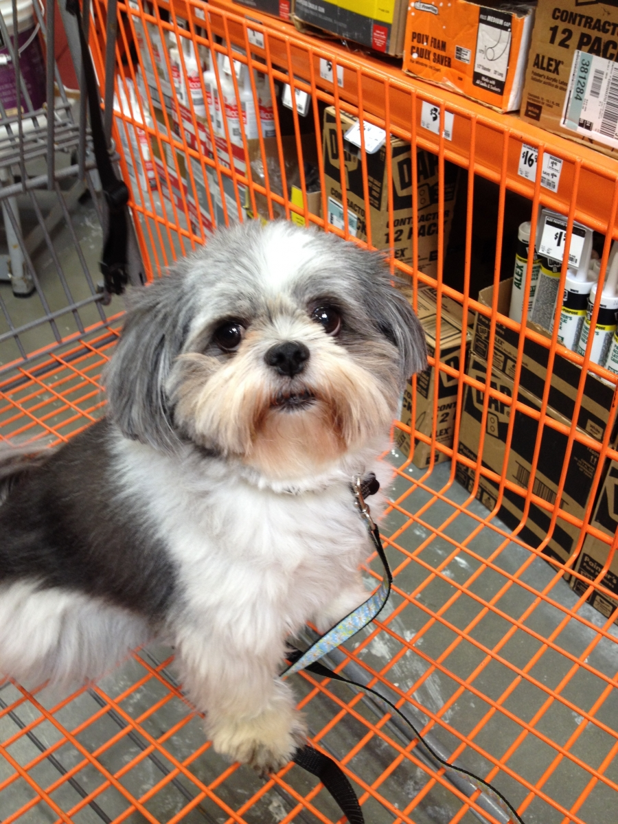 Shopping With Your Shih Tzu Surprising Chain Stores That Allow Pets