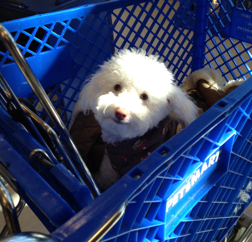 Chain stores that allow pets