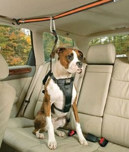 Pet Travel Properly Securing Pet in Vehicle