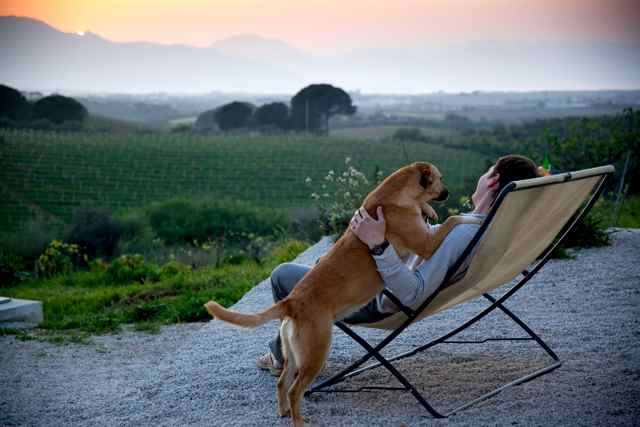 Pet Friendly Wineries