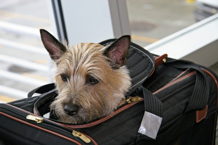 Cost of Pet Travel