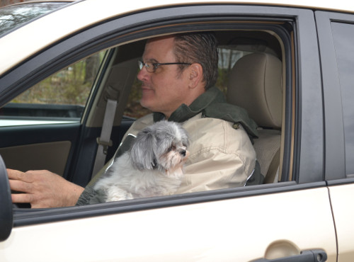Driving with Pets on Lap