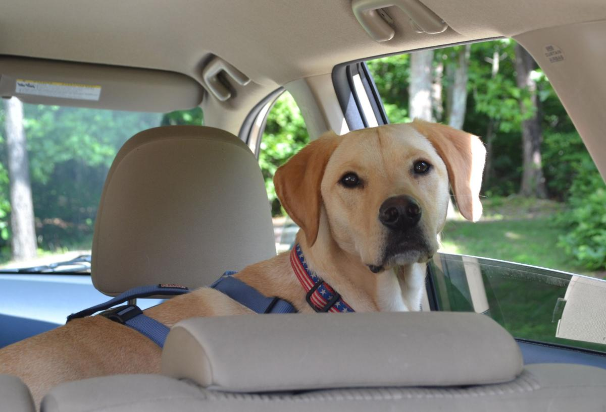 Pet Travel Tips for the Car