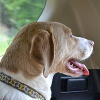 Dangers of Leaving Pets in Hot Car