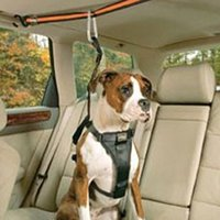 Properly Securing Your Pet in a Vehicle