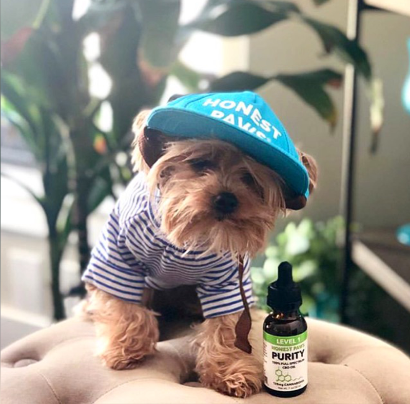 Tucker Talks With Honest Paws: All-Natural CBD Oil & Treats