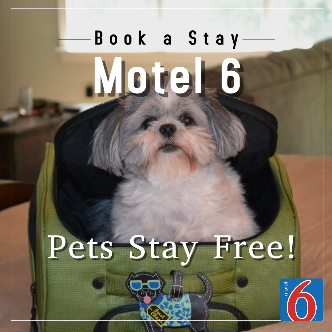 Book a Pet Friendly Motel 6