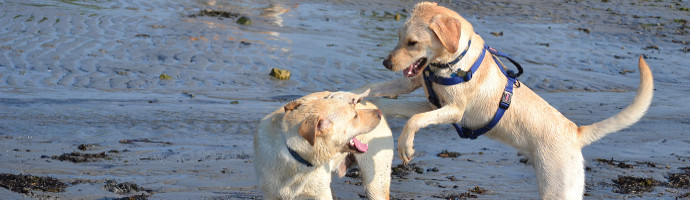 Pet Friendly Beaches in Cayucos, California