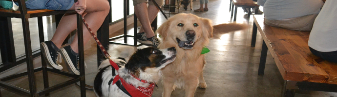 Dog Friendly Breweries in Idaho