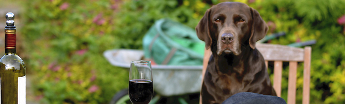 Pet Friendly Wineries in Julian, California