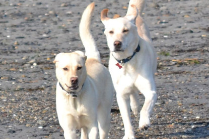 Planning A Getaway To Longmont Co Find Pet Friendly Hotels In