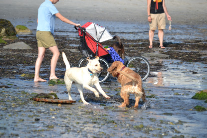 Planning A Getaway To Wells Me Find Pet Friendly Hotels In