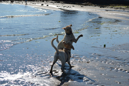 Planning A Getaway To Montauk Ny Find Pet Friendly Hotels In