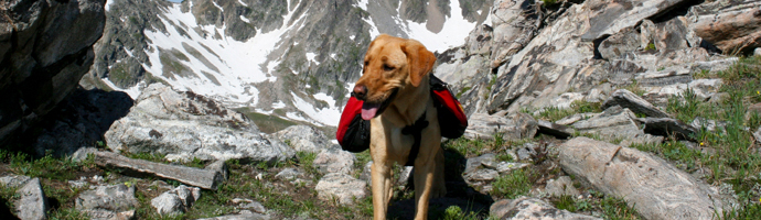 Pet Friendly Hotels in Mammoth Lakes, California