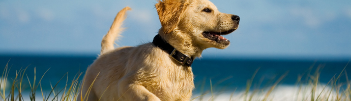 Pet Friendly Hotels in Oakland, California