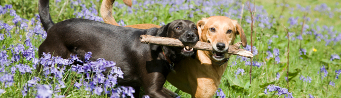 Pet Friendly Hotels in Spokane Valley, Washington