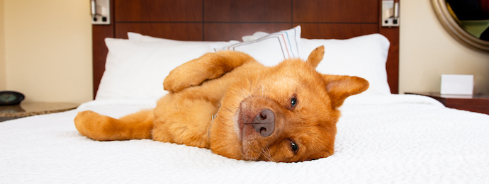 Hartford, Connecticut Pet Friendly Hotels Lodging