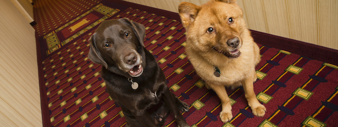 Dubuque, Iowa Pet Friendly Hotels Lodging