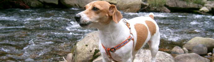 Statewide, Virginia Pet Friendly Hotels Lodging